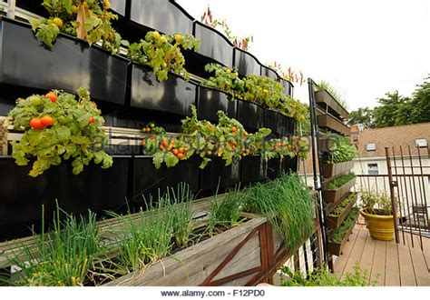 rooftop vegetable gardens roof garden restaurant stock photos roof garden restaurant stock images alamy