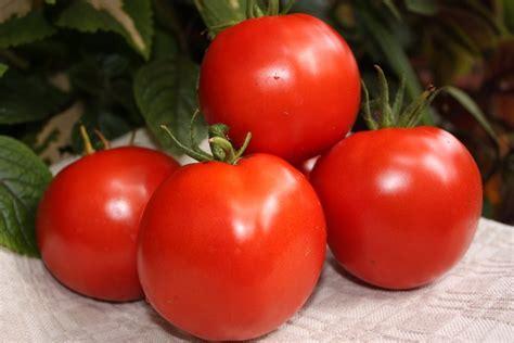 Latvijas Delikatese (tomātu stāds podiņā) - Senās tomātu ...