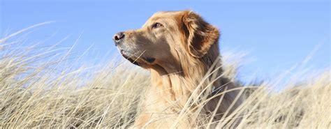 Urlaub Mit Hund Auf Sylt  Unterkunft Mit Haustier Erlaubt