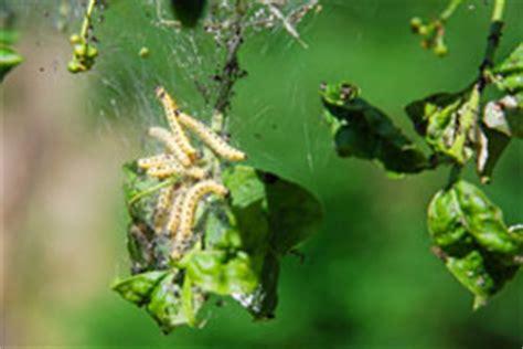 Schädlinge Im Garten  6 Schädlinge Und Deren Bekämpfung