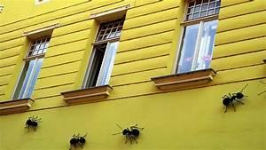 Ameisenstraße Im Haus : ameisen im haus antenne steiermark ~ Watch28wear.com Haus und Dekorationen