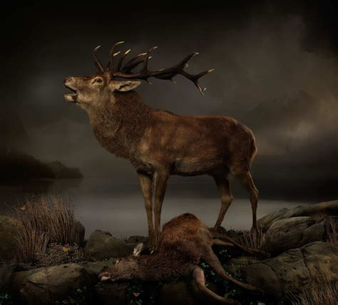 Incredible Animal Photography by Joseph McGlennon