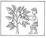Mustard Coloring Seed Parable Drawing Plant Tiny Colouring Template Sketch Getdrawings Popular sketch template