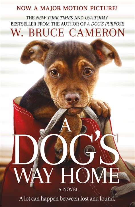 icymi   trailer   dogs  home