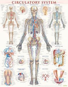 97 Best Images About Medical On Pinterest
