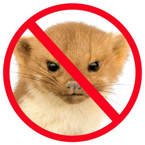 fernhaltemittel gegen katzen neudorff hunde und katzen schreck af 500 ml kaufen bei g 228 rtner p 246 tschke