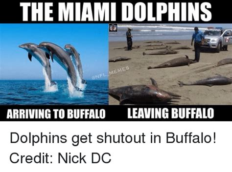 Miami Memes - funny meme memes miami dolphins and nfl memes of 2016 on sizzle