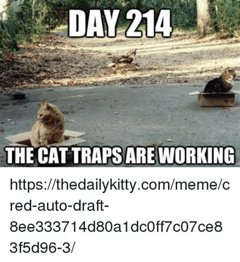 Cat Trap Meme - day 214 the cat traps are working httpsthedailykittycommemecred auto draft