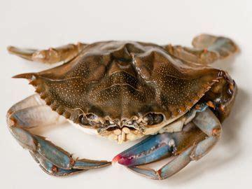 soft shell blue crab giovannis fish market