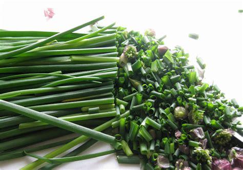 planter des herbes aromatiques en pot plante aromatique mettez du go 251 t dans votre int 233 rieur archzine fr