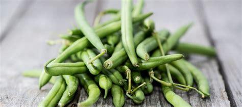 cuisiner des haricots verts en boite comment cuisiner les haricots verts 28 images comment
