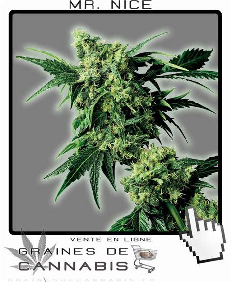 graines de mister cannabis