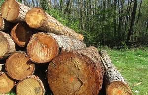 Foret à Bois : la wallonie branche ses for ts sur internet ~ Nature-et-papiers.com Idées de Décoration