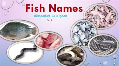 types  fish names  india  images tamil english