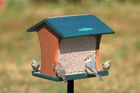 duncraft com duncraft eco strong pole mount hopper bird