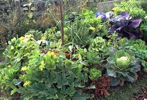 gemueseanbau gutes wachstum im huegelbeet