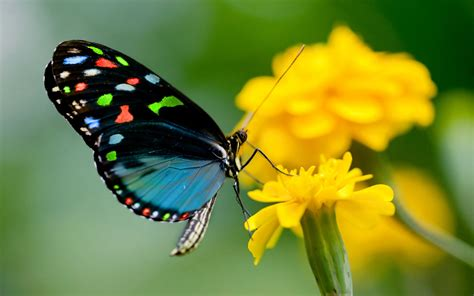 Download and share awesome cool background hd mobile phone wallpapers. Butterfly on yellow flowers so nice images HD Wallpapers   HD Wallpapers