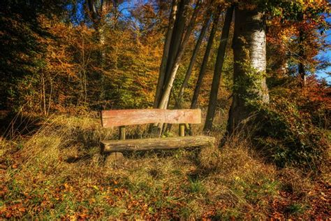 picture landscape bench leaf wood nature tree
