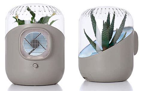 plants as indoor air purifiers gardens