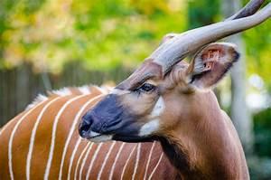 Free Images : wildlife, horn, portrait, mammal, fauna ...  Animal