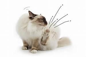 Flöhe Bei Katzen Bekämpfen : was tun wenn die katze fl he hat ~ Orissabook.com Haus und Dekorationen