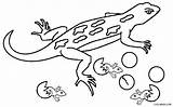 Lizard Coloring Pages Gecko Printable Colouring Reptiles Drawing Template Reptile Cool2bkids Cartoon Desert Getdrawings Getcoloringpages Picolour Getcolorings Crawling Ceiling Popular sketch template