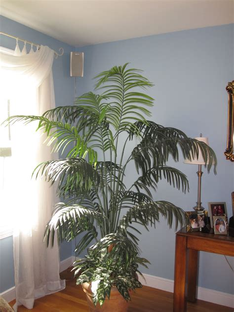 Images Of Living Room Plants by Plants For Living Room Marceladick