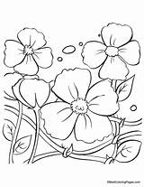 Poppy Coloring Pages Flowers Flower Colouring Sheets Drawing Anzac Template Poppies Remembrance Clipart Blank Clip Printables Getdrawings Library Adult Popular sketch template