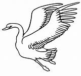 Swan Coloring Flying Schwan Drawing Ausmalbild Fliegender Volando Colorear Cisne Disegni Colorare Zum Bird Printable Ausmalbilder Cigno Kleurplaten Cigni Dibujo sketch template