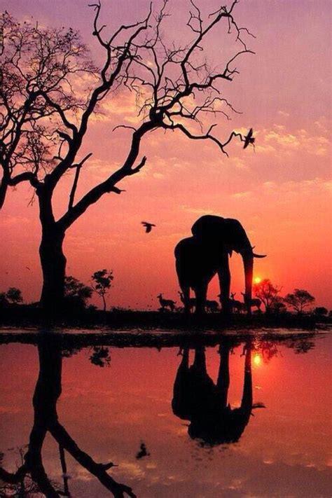 elephant silhouette sunset painting background beautiful elephant land reflection sunset