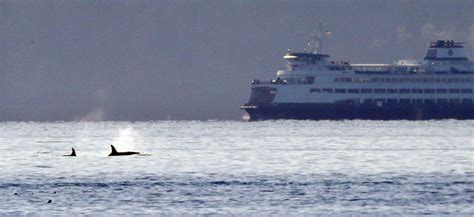 puget sound orcas circle ferry carrying artifacts