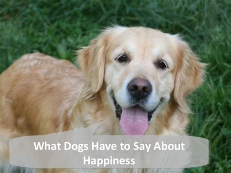 dogs     happiness