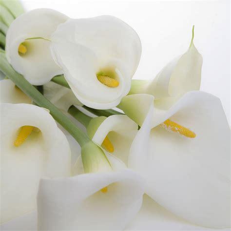 wedding lillies varkore arum or calla lilies zantedeschia aethiopica on pinterest calla lily tattoos