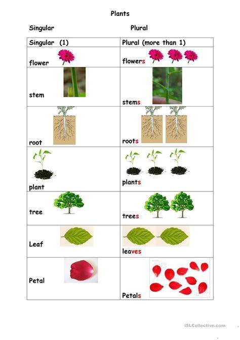 plants singular plural worksheet  esl printable