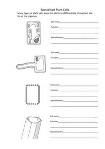 Plant Cell Differentiation Worksheet
