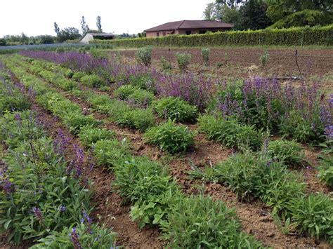 chambre d agriculture du tarn plantes à parfum aromatiques et médicinales chambre d