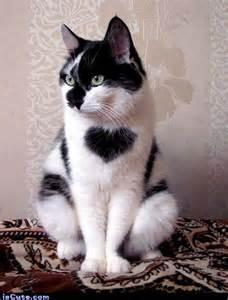 cat spots cat iscute
