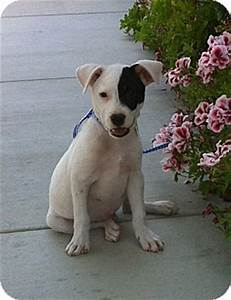 Sweet Jack   Adopted Puppy   4Paws/Jack/jrt/BorderCollieMx ...