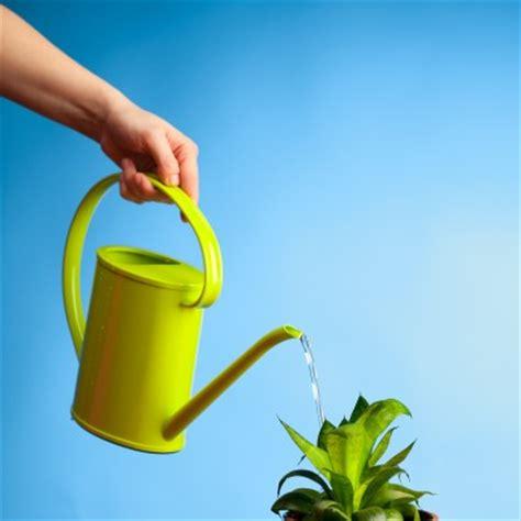 siege de la fifa donnez de l eau sale à vos plantes