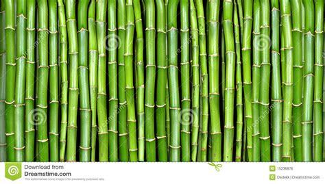 banner  bamboo royalty  stock image image