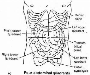 Anteriolateral Abdominal Wall - Medicine 5162 with All at ...
