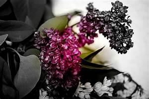 Engelstrompete Blüht Nicht : versuch spielereien experimente auch dann wenn der flieder nicht mehr bl ht foto bild ~ A.2002-acura-tl-radio.info Haus und Dekorationen