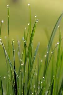 Grasses After the Rain
