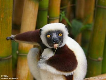 Funny Animals Wallpapers Cool Background Animal Desktop