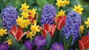 Was Sind Frühlingsblumen : fr hlingsblumen 100 faszinierende bilder ~ Whattoseeinmadrid.com Haus und Dekorationen