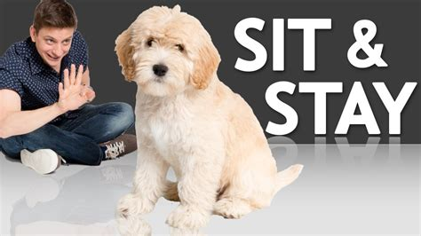teach  puppy  sit  stay youtube