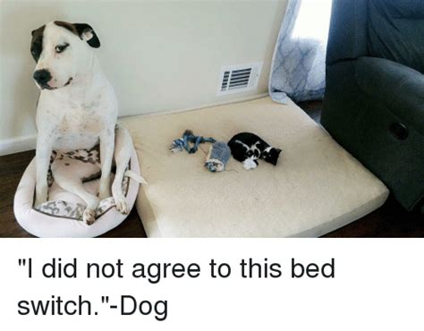 Nintendo Switch Dog Memes