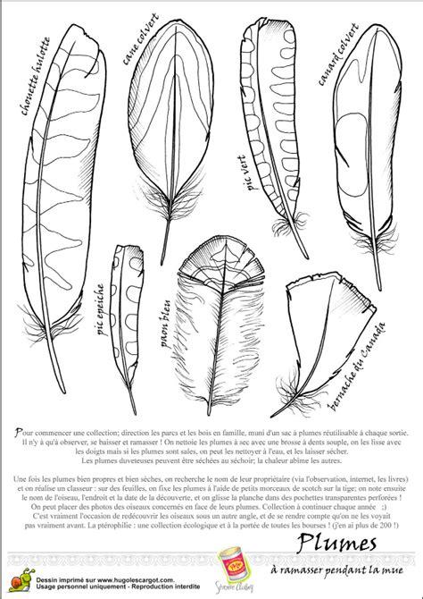 plume d oiseau dessin oiseau legende plumes2 plumes plumes en papier dessin