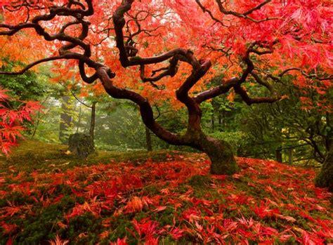Was Passt Zu Ahorn by Japanischer Ahorn Farbenfrohe Gartengestaltung