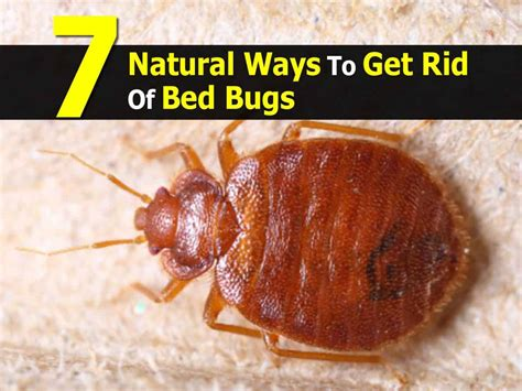 Rid Of Bed Bugs 7 ways to get rid of bed bugs